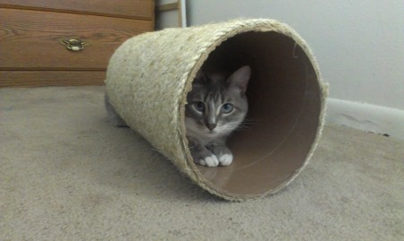 It's a cat tube!